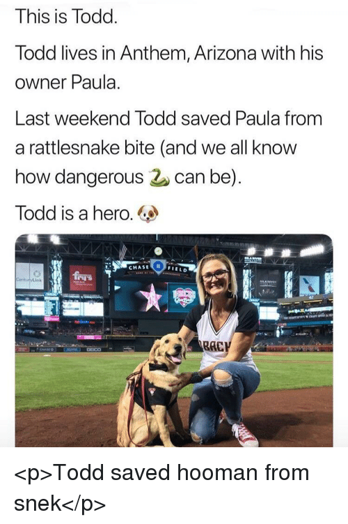 paula: This is Todd  lodd lives in Anthem, Arizona with his  owner Paula.  Last weekend lodd saved Paula from  a rattlesnake bite (and we all know  how dangerous can be)  Todd is a hero.  CHASE  0  FIELD <p>Todd saved hooman from snek</p>