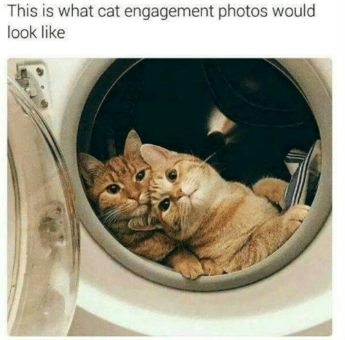 Memes, 🤖, and Cat: This is what cat engagement photos would  look like