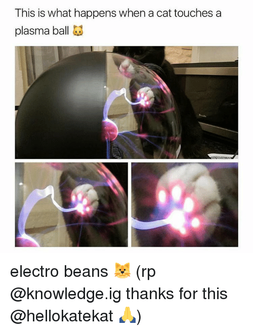 electro: This is what happens when a cat touches a  plasma ball electro beans☇🐱 (rp @knowledge.ig thanks for this @hellokatekat 🙏)