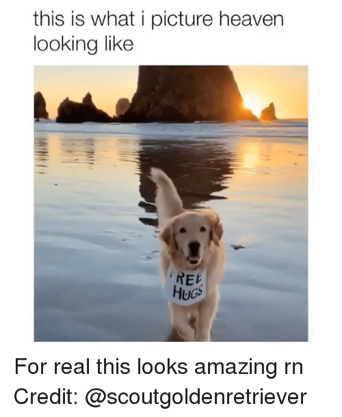 Heaven, Memes, and Amazing: this is what i picture heaven  looking like  REK  HuGs For real this looks amazing rn Credit: @scoutgoldenretriever