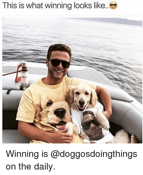 Memes, 🤖, and What: This is what winning looks like Winning is @doggosdoingthings on the daily.