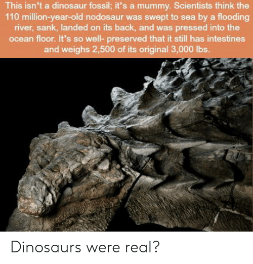 Andrew Bogut, Dinosaur, and Dinosaurs: This isn't a dinosaur fossil; it's a mummy. Scientists think the  110 million-year-old nodosaur was swept to sea by a flooding  river, sank, landed on its back, and was pressed into the  ocean floor. It's so well- preserved that it still has intestines  and weighs 2,500 of its original 3,000 lbs. Dinosaurs were real?