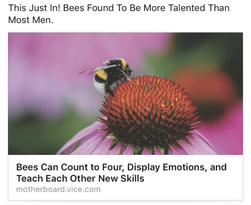 Bees, Vice, and Com: This Just In! Bees Found To Be More Talented Than  Most Men.  Bees Can Count to Four, Display Emotions, and  Teach Each Other New Skills  motherboard.vice.com