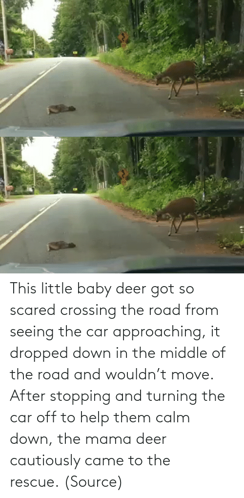 The Road: This little baby deer got so scared crossing the road from seeing the car approaching, it dropped down in the middle of the road and wouldn't move. After stopping and turning the car off to help them calm down, the mama deer cautiously came to the rescue. (Source)