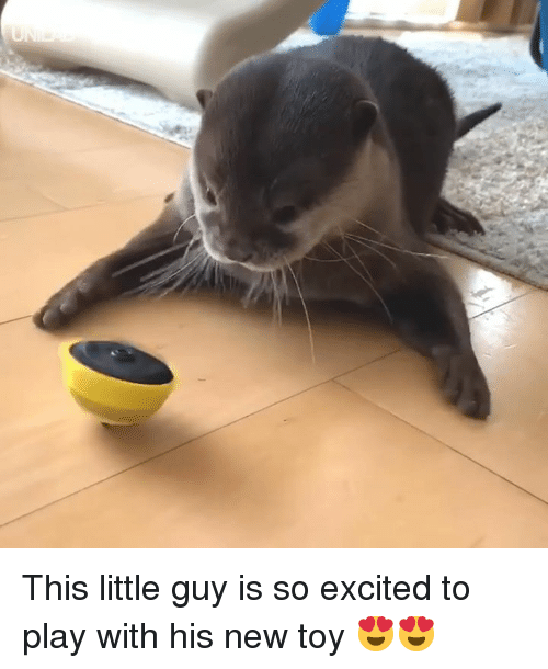 Dank, 🤖, and Play: This little guy is so excited to play with his new toy 😍😍