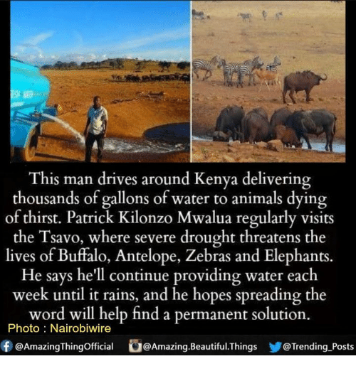 Animals, Beautiful, and Memes: This man drives around Kenya delivering  thousands of gallons of water to animals dying  of thirst. Patrick Kilonzo Mwalua regularly visits  avo, where severe drought threatens the  the lives of Buffalo, Antelope, Zebras and Elephants.  He says he'll continue providing water each  week until it rains, and he hopes spreading the  word will help find a permanent solution.  Photo Nairobiwire  f @AmazingThingofficial G@Amazing.Beautiful.Things Trending Posts