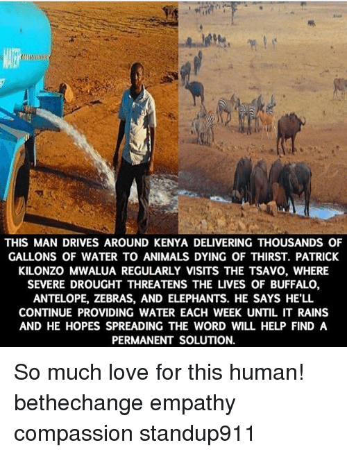 Animals, Love, and Memes: THIS MAN DRIVES AROUND KENYA DELIVERING THOUSANDS OF  GALLONS OF WATER TO ANIMALS DYING OF THIRST. PATRICK  KILONZO MWALUA REGULARLY VISITS THE TSAVO, WHERE  SEVERE DROUGHT THREATENS THE LIVES OF BUFFALO,  ANTELOPE, ZEBRAS, AND ELEPHANTS. HE SAYS HE'LL  CONTINUE PROVIDING WATER EACH WEEK UNTIL IT RAINS  AND HE HOPES SPREADING THE WORD WILL HELP FIND A  PERMANENT SOLUTION. So much love for this human! bethechange empathy compassion standup911