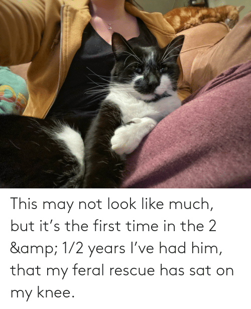 Knee: This may not look like much, but it's the first time in the 2 & 1/2 years I've had him, that my feral rescue has sat on my knee.