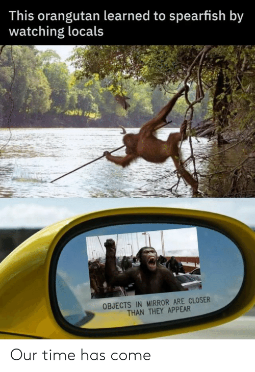 Mirror, Time, and Closer: This orangutan learned to spearfish by  watching locals  OBJECTS IN MIRROR ARE CLOSER  THAN THEY APPEAR Our time has come