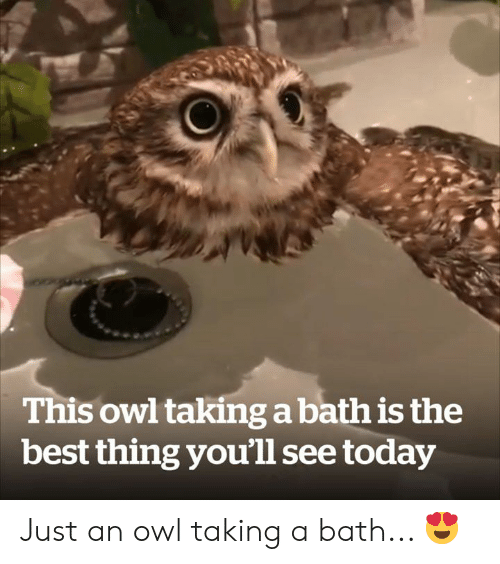 Best, Today, and Owl: This owl taking a bath is the  best thing you'll see today Just an owl taking a bath... 😍