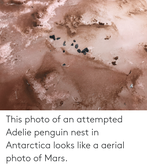 Antarctica: This photo of an attempted Adelie penguin nest in Antarctica looks like a aerial photo of Mars.