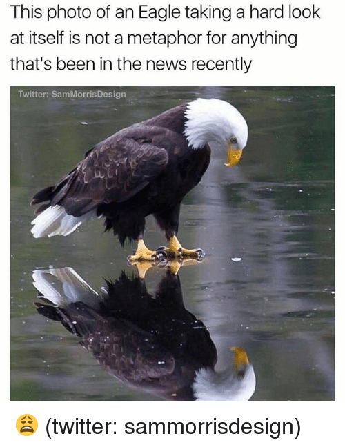 News, Twitter, and Eagle: This photo of an Eagle taking a hard look  at itself is not a metaphor for anything  that's been in the news recently  Twitter: SamMorrisDesign 😩 (twitter: sammorrisdesign)