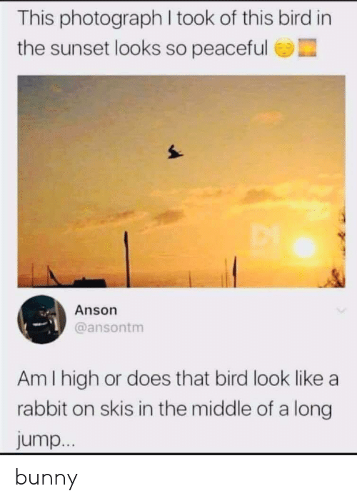 Rabbit: This photograph I took of this bird in  the sunset looks so peaceful  Anson  @ansontm  Am I high or does that bird look like a  rabbit on skis in the middle of a long  jump... bunny