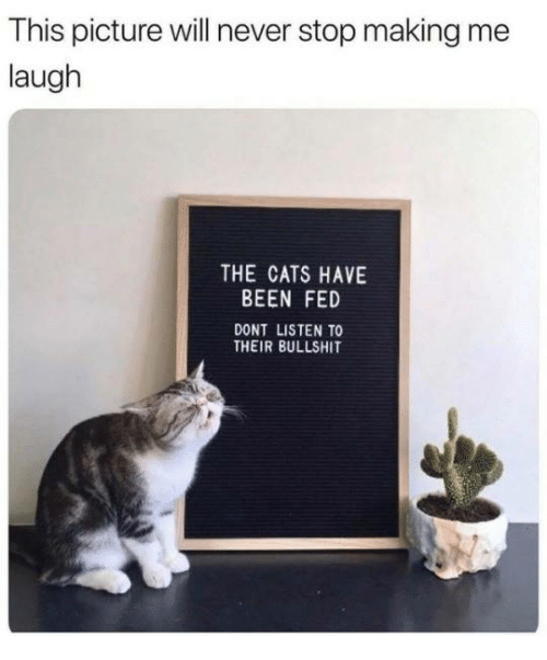 Cats, Dank, and Bullshit: This picture will never stop making me  laugh  THE CATS HAVE  BEEN FED  DONT LISTEN TO  THEIR BULLSHIT