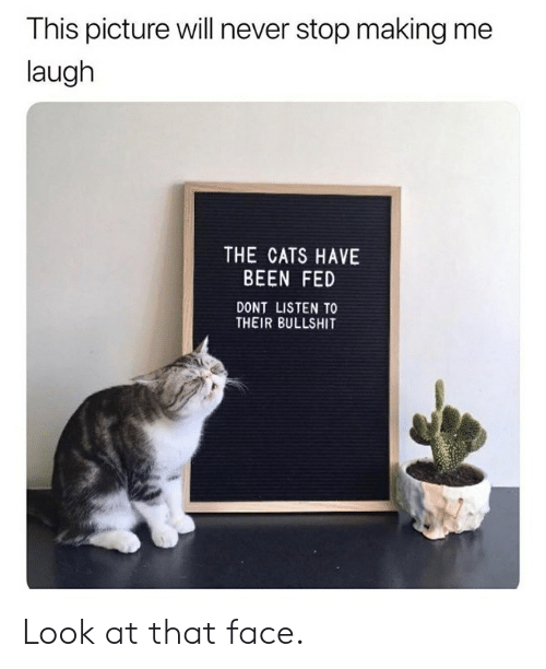 Cats, Dank, and Bullshit: This picture will never stop making me  laugh  THE CATS HAVE  BEEN FED  DONT LISTEN TO  THEIR BULLSHIT Look at that face.