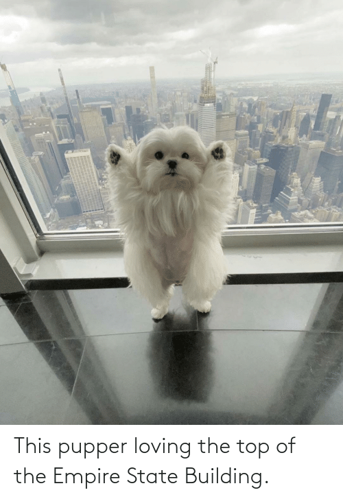 building: This pupper loving the top of the Empire State Building.