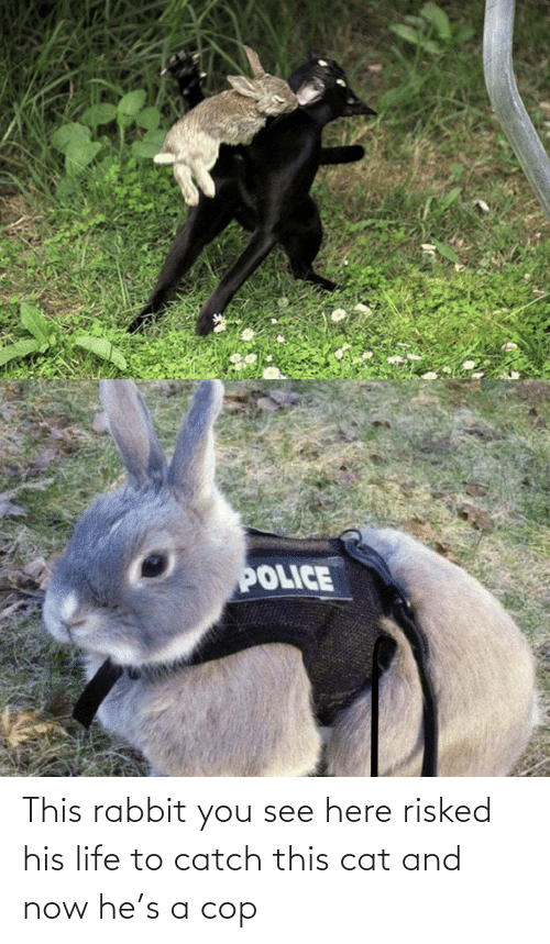 His: This rabbit you see here risked his life to catch this cat and now he's a cop
