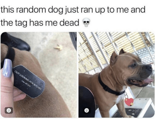 Dog, Looking, and Random: this random dog just ran up to me and  the tag has me dead  OUT LOOKING FOR BITCHES  CALL