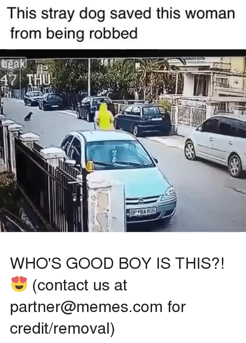 Dank, Memes, and Good: This stray dog saved this woman  from being robbed WHO'S GOOD BOY IS THIS?! 😍  (contact us at partner@memes.com for credit/removal)