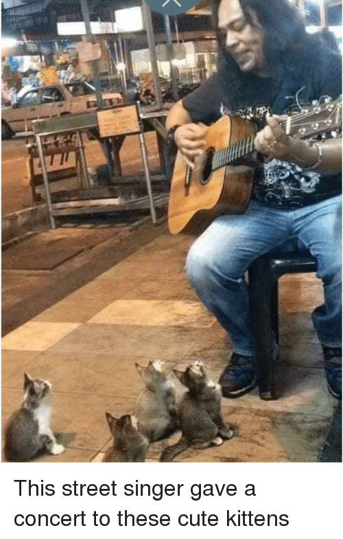 Cute, Kittens, and Singer: This street singer gave a concert to these cute kittens