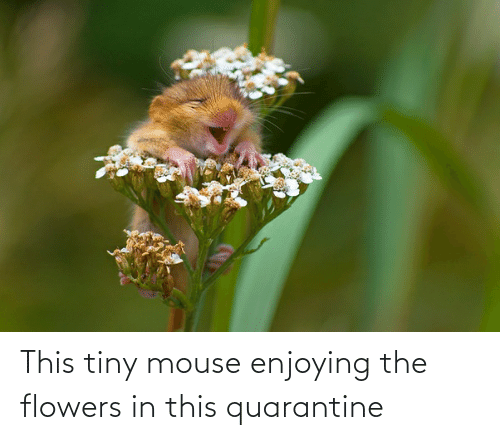 Flowers: This tiny mouse enjoying the flowers in this quarantine