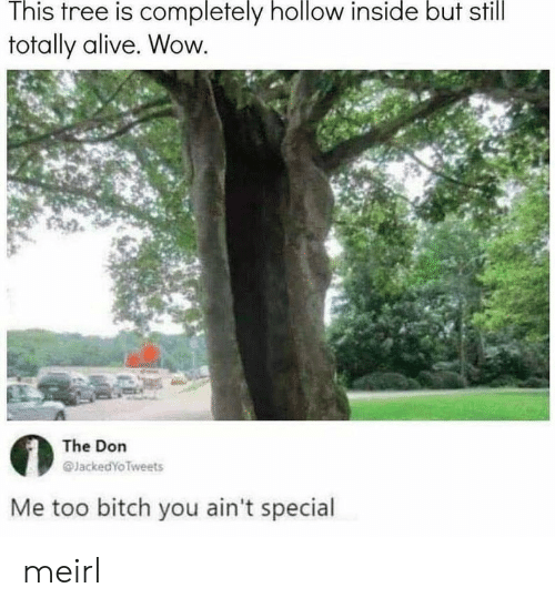 Alive, Bitch, and Wow: This tree is completely hollow inside but still  totally alive. Wow  The Don  @JackedYoTweets  Me too bitch you ain't special meirl