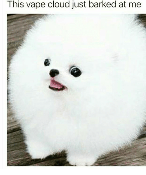 Vape, Cloud, and This: This vape cloud just barked at me