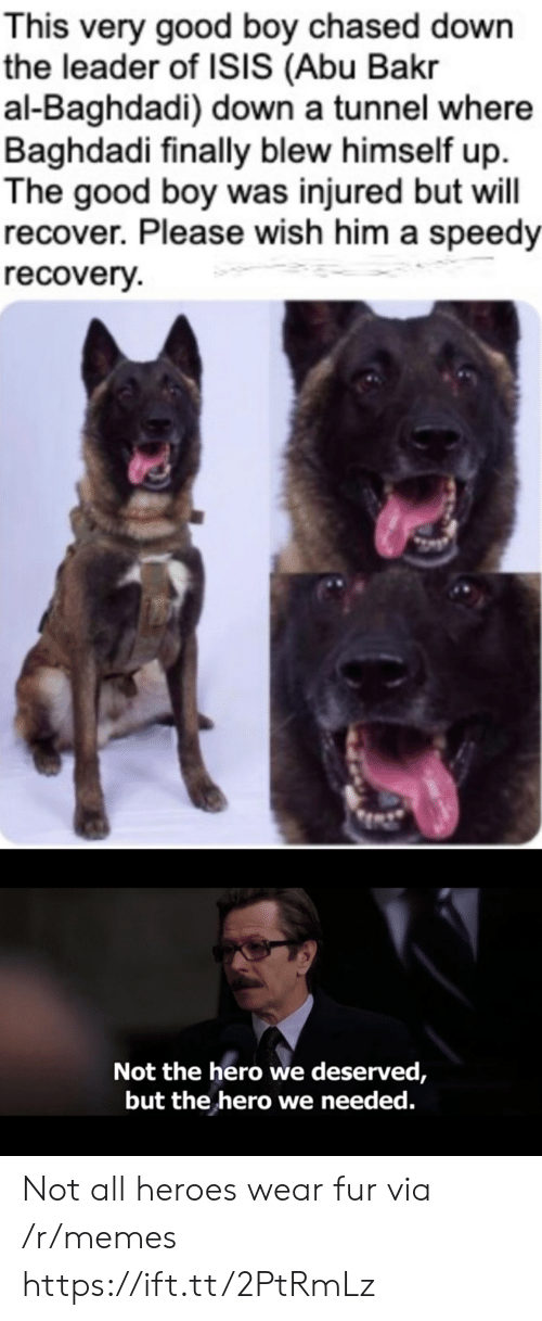 abu: This very good boy chased down  the leader of ISIS (Abu Bakr  al-Baghdadi) down a tunnel where  Baghdadi finally blew himself up  The good boy was injured but will  recover. Please wish him a speedy  recovery  Not the hero we deserved,  but the hero we needed. Not all heroes wear fur via /r/memes https://ift.tt/2PtRmLz