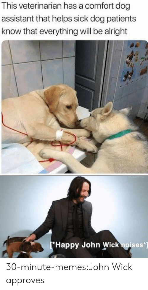 John Wick, Memes, and Tumblr: This veterinarian has a comfort dog  assistant that helps sick dog patients  know that everything will be alright  Happy John Wick noises] 30-minute-memes:John Wick approves