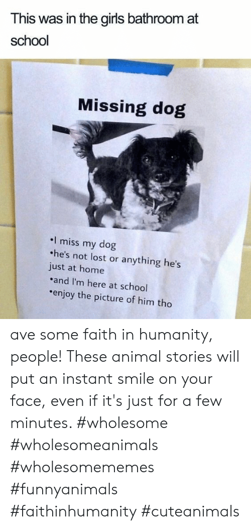 Girls, School, and Lost: This was in the girls bathroom at  school  Missing dog  I miss my dog  he's not lost or anything he's  just at home  and I'm here at school  enjoy the picture of him tho ave some faith in humanity, people! These animal stories will put an instant smile on your face, even if it's just for a few minutes. #wholesome #wholesomeanimals #wholesomememes #funnyanimals #faithinhumanity #cuteanimals