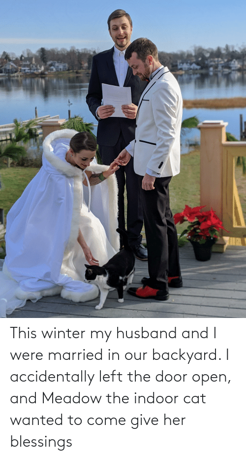 The Door: This winter my husband and I were married in our backyard. I accidentally left the door open, and Meadow the indoor cat wanted to come give her blessings
