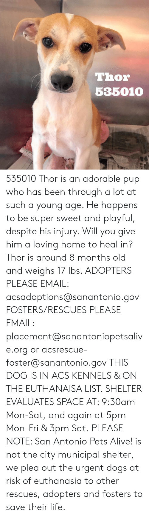 Alive, Dogs, and Life: Thor  535010 535010 Thor is an adorable pup who has been through a lot at such a young age. He happens to be super sweet and playful, despite his injury. Will you give him a loving home to heal in? Thor is around 8 months old and weighs 17 lbs.   ADOPTERS PLEASE EMAIL:  acsadoptions@sanantonio.gov  FOSTERS/RESCUES PLEASE EMAIL: placement@sanantoniopetsalive.org or acsrescue-foster@sanantonio.gov  THIS DOG IS IN ACS KENNELS & ON THE EUTHANAISA LIST. SHELTER EVALUATES SPACE AT: 9:30am Mon-Sat, and again at 5pm Mon-Fri & 3pm Sat.  PLEASE NOTE: San Antonio Pets Alive! is not the city municipal shelter, we plea out the urgent dogs at risk of euthanasia to other rescues, adopters and fosters to save their life.