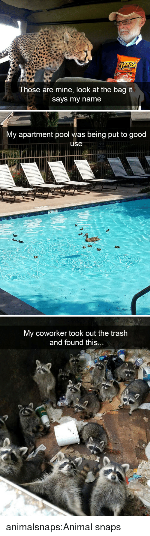 Target, Trash, and Tumblr: Those are mine, look at the bag it  says my name   My apartment pool was being put to good  use  911   My coworker took out the trash  and found this.. animalsnaps:Animal snaps