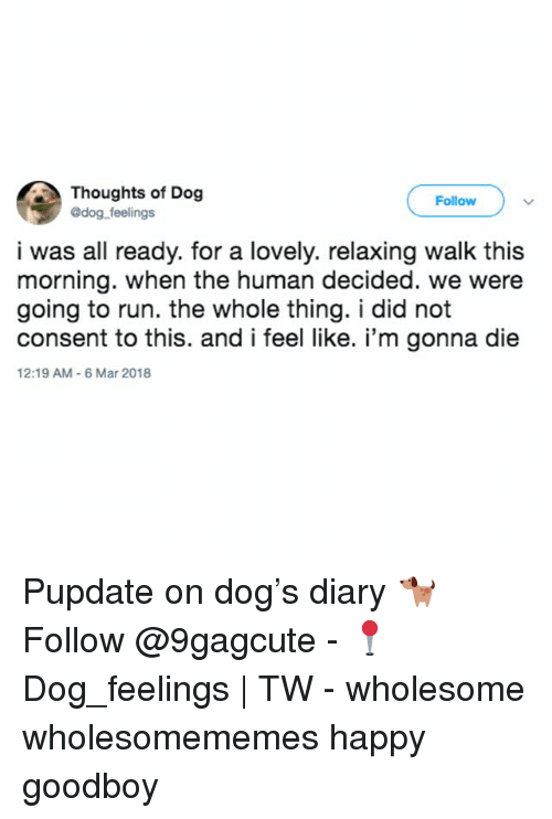 Goodboy: Thoughts of Dog  @dog feelings  Follow  i was all ready. for a lovely. relaxing walk this  morning. when the human decided. we were  going to run. the whole thing. i did not  consent to this. and i feel like. i'm gonna die  12:19 AM-6 Mar 2018 Pupdate on dog's diary 🐕 Follow @9gagcute - 📍Dog_feelings | TW - wholesome wholesomememes happy goodboy