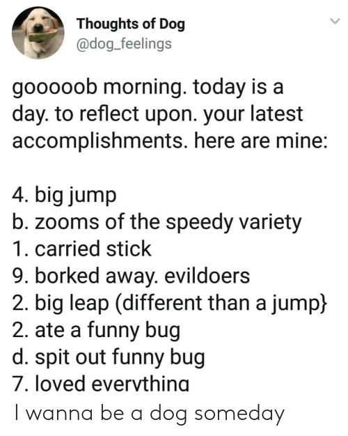 Borked: Thoughts of Dog  @dog_feelings  gooooob morning. today is a  day. to reflect upon. your latest  accomplishments. here are mine:  4. big jump  b. zooms of the speedy variety  1. carried stick  9. borked away. evildoers  2. big leap (different than a jump)  2. ate a funny bug  d. spit out funny bug  7. loved everything I wanna be a dog someday
