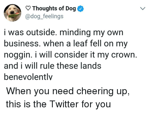 minding my own business: Thoughts of Dog  @dog._feelings  i was outside. minding my own  business. when a leaf fell on my  noggin. i will consider it my crown.  and i will rule these lands  benevolently When you need cheering up, this is the Twitter for you