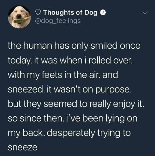 feets: Thoughts of Dog  @dog_feelings  the human has only smiled once  today. it was when i rolled over.  with my feets in the air. and  sneezed. it wasn't on purpose  but they seemed to really enjoy it.  so since then. i've been lying on  my back. desperately trying to  sneeze