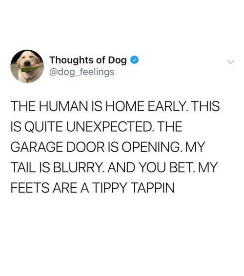 feets: Thoughts of Dog  @dog_feelings  THE HUMAN IS HOME EARLY. THIS  IS QUITE UNEXPECTED. THE  GARAGE DOOR IS OPENING. MY  TAIL IS BLURRY. AND YOU BET. MY  FEETS ARE A TIPPY TAPPIN ᵖ ᶦ ᵗ ᵗ ᵉ ʳ ᵖ ᵃ ᵗ ᵗ ᵉ ʳ ᶦ ⁿ ᵗ ᵉ ⁿ ˢ ᶦ ᶠ ᶦ ᵉ ˢ