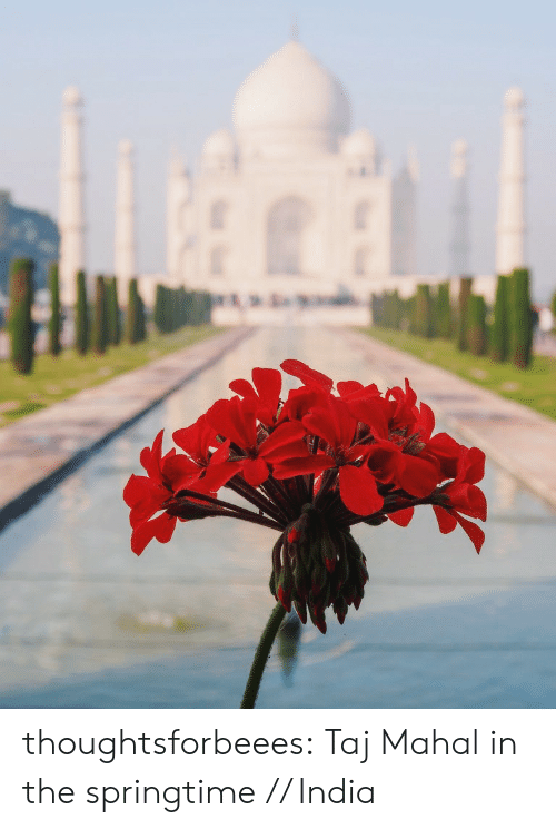 mahal: thoughtsforbeees:  Taj Mahal in the springtime // India