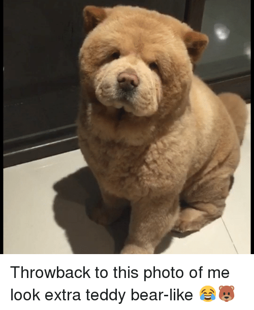 Memes, Bear, and 🤖: Throwback to this photo of me look extra teddy bear-like 😂🐻