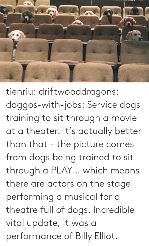 Performance: tienriu: driftwooddragons:  doggos-with-jobs: Service dogs training to sit through a movie at a theater. It's actually better than that - the picture comes from dogs being trained to sit through a PLAY… which means there are actors on the stage performing a musical for a theatre full of dogs.   Incredible vital update,  it was a performance of Billy Elliot.