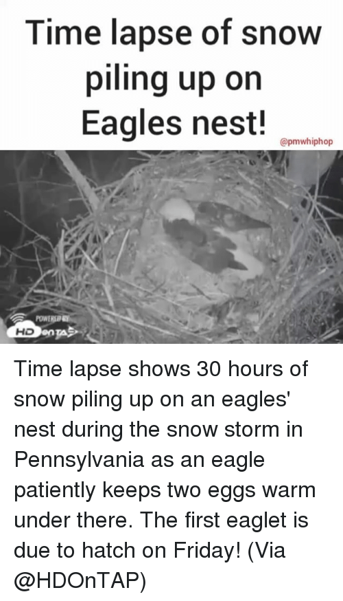 snow storm: Time lapse of snow  piling up on  Eagles nest!  apmwhiphop  HD Time lapse shows 30 hours of snow piling up on an eagles' nest during the snow storm in Pennsylvania as an eagle patiently keeps two eggs warm under there. The first eaglet is due to hatch on Friday! (Via @HDOnTAP)