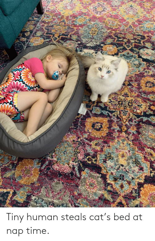 tiny: Tiny human steals cat's bed at nap time.