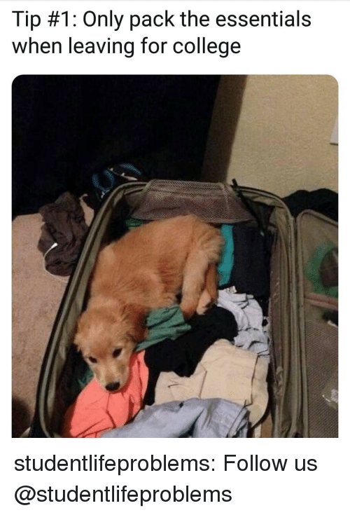 College, Tumblr, and Blog: Tip #1: Only pack the essentials  when leaving for college studentlifeproblems:  Follow us @studentlifeproblems