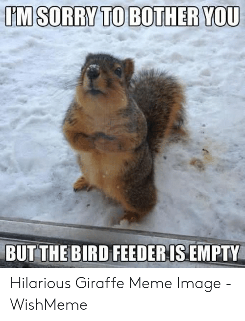 Wishmeme: TM SORRY TO BOTHER YOU  BUT THE BIRD FEEDERIS EMPTY Hilarious Giraffe Meme Image - WishMeme