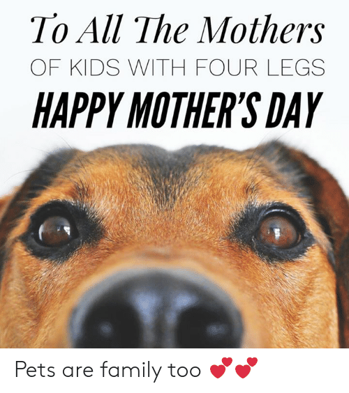 Family, Memes, and Mother's Day: To All The Mothers  OF KIDS WITH FOUR LEGS  HAPPY MOTHER'S DAY Pets are family too 💕💕