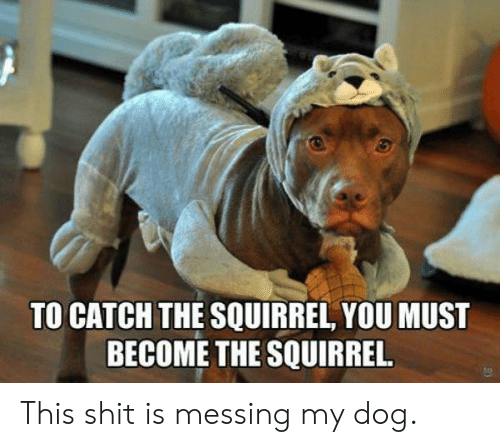 Shit, Squirrel, and Dog: TO CATCH THE SQUIRREL, YOU MUST  BECOME THE SQUIRREL. This shit is messing my dog.
