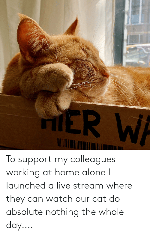colleagues: To support my colleagues working at home alone I launched a live stream where they can watch our cat do absolute nothing the whole day....