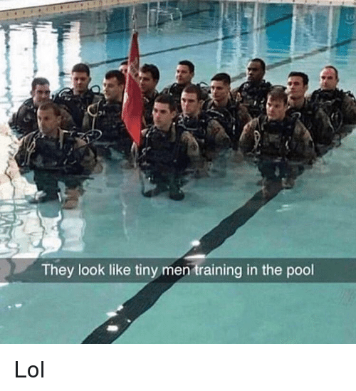 Lol, Memes, and Pool: to  They look like tiny men training in the pool Lol