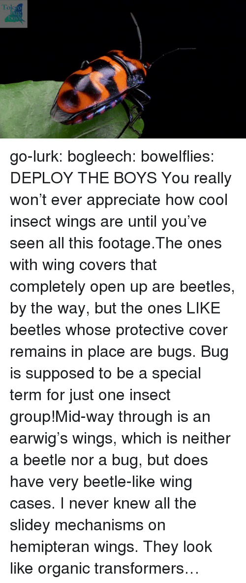 Target, Transformers, and Tumblr: To  ug  boys go-lurk:  bogleech:  bowelflies: DEPLOY THE BOYS You really won't ever appreciate how cool insect wings are until you've seen all this footage.The ones with wing covers that completely open up are beetles, by the way, but the ones LIKE beetles whose protective cover remains in place are bugs. Bug is supposed to be a special term for just one insect group!Mid-way through is an earwig's wings, which is neither a beetle nor a bug, but does have very beetle-like wing cases.  I never knew all the slidey mechanisms on hemipteran wings. They look like organic transformers…